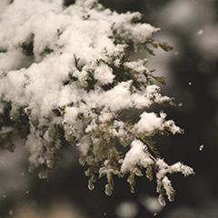 Dimanche 2 décembre